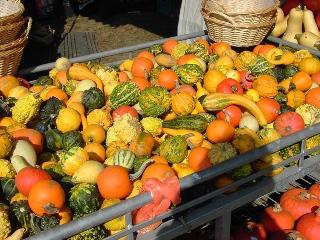 Bauernmarkt in Erle