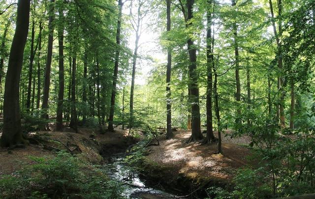 Naturpark Tiergarten Schloss Raesfeld