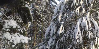 Schnee, Schnee, Schnee im Raesfelder Tiergarten