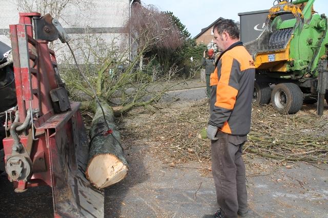 Thomas Brömmel, Leiter vom Bauhof überwachte die Baumfällaktion