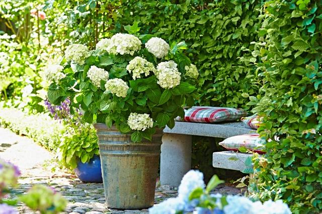 In einen alten Eimer gepflanzt, verbreiten Hortensien den ganzen Sommer über ein ländlich-antikes Flair. Foto: djd/Endless Summer