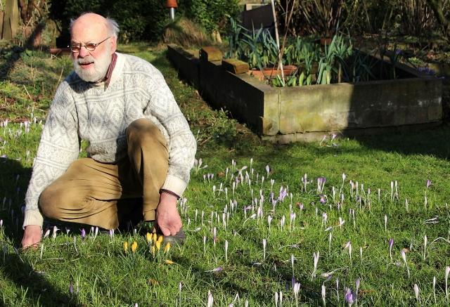 Gerd Gutschow freut sich besonders im Frühjahr darauf, wenn seine tausend Krokusse rund ums Haus blühen.