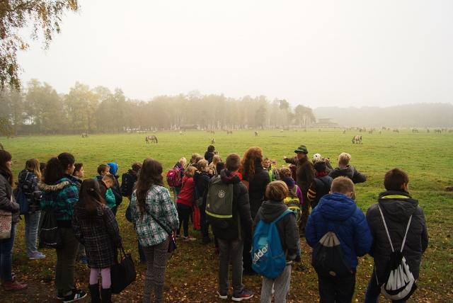 merfelder bruch wildpferde gesamtschule-borken-raesfeld-1-640x428