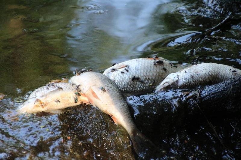 Hundert verendete fische im tiergarten von schloss for Teich ohne fische