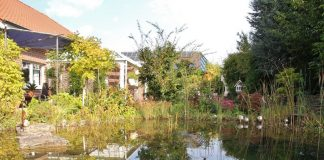Stauden und Teichgärten im Herbst von Firma Baumeister aus Raesfeld