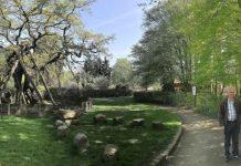 Erler historische Femeiche im Naturpark Hohe Mark Münsterland