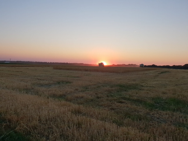 onnenuntergang über trockene Kornfelder