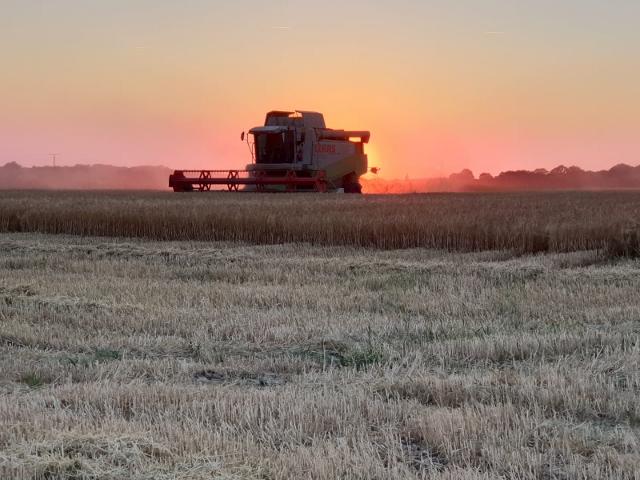 Sonnenuntergang über trockene Kornfelder