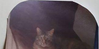 Katze bestialisch gequält