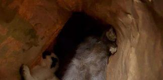 Tote Kaninchen in Erle gefunden