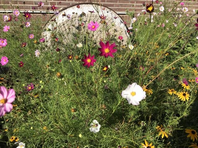 Blühende Vorgärten in Raesfeld-Erle