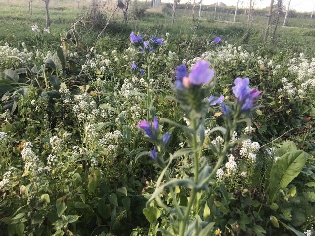 Blühstreifen für Artenvielfalt in Raesfeld