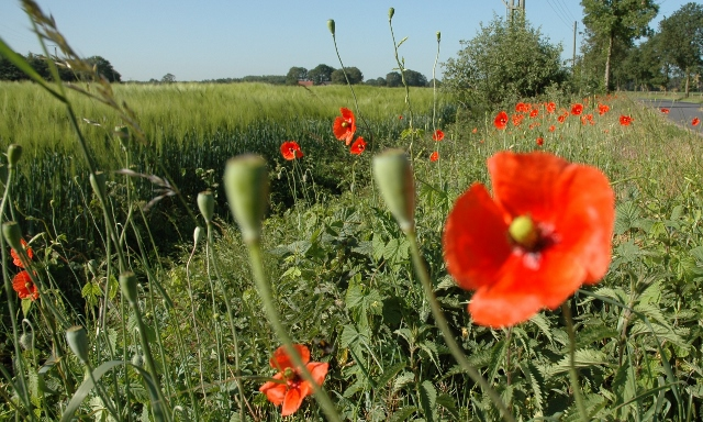Schutz vor Insektensterben Blühstreifen in Raesfeld