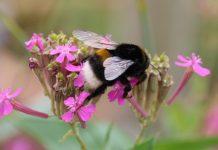 Blühstreifen gegen Insektensterben Raesfeld