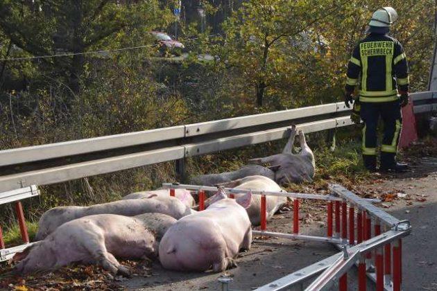 Unfall mit Viehtransporter B224