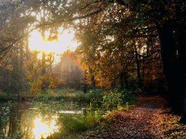 Naturpark Raesfeld - Tiergarten im Herbst