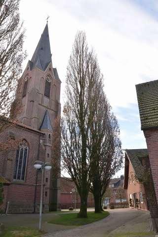 Stileichen Erler Kirche sollen gefällt werden