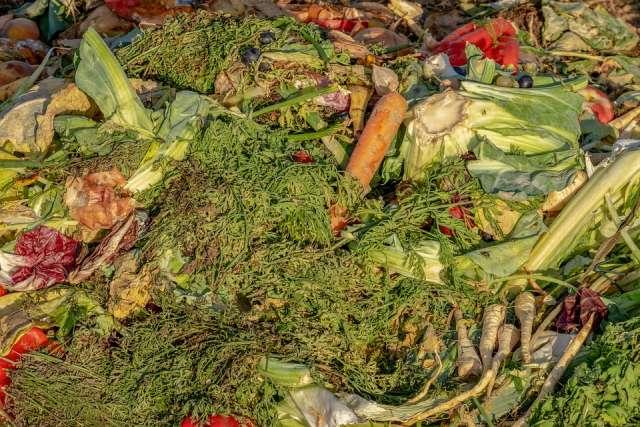 Biomüll Abfall