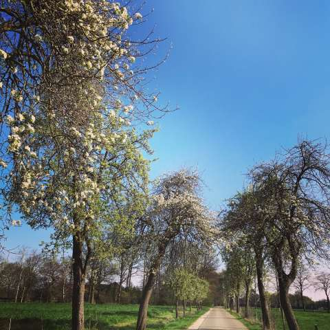 Wandern im Frühling Naturpark Hohemark Münsterland