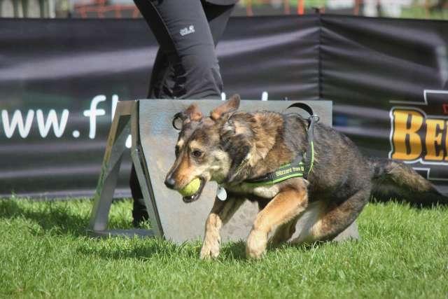 Flyball - Cup NRW Heiden 2019