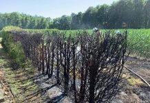 Hecken und Flächenbrand Dämmerwald
