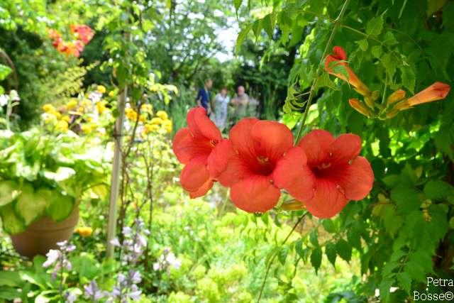 Garten Baumeister Raesfeld
