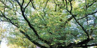 Unter den Kastanien in Erle
