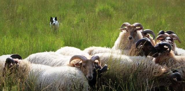 Schafe Tiergarten Schloss Raesfeld
