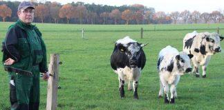 Landwirt Felix Brömmel züchtet Pustertaler - Sprinzen