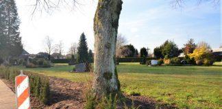 Friedhof Koniferen statt Mauer
