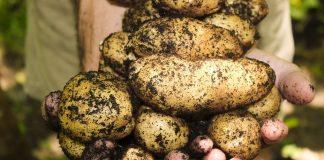 Landwirtschaftliche Produkte Coronakrise