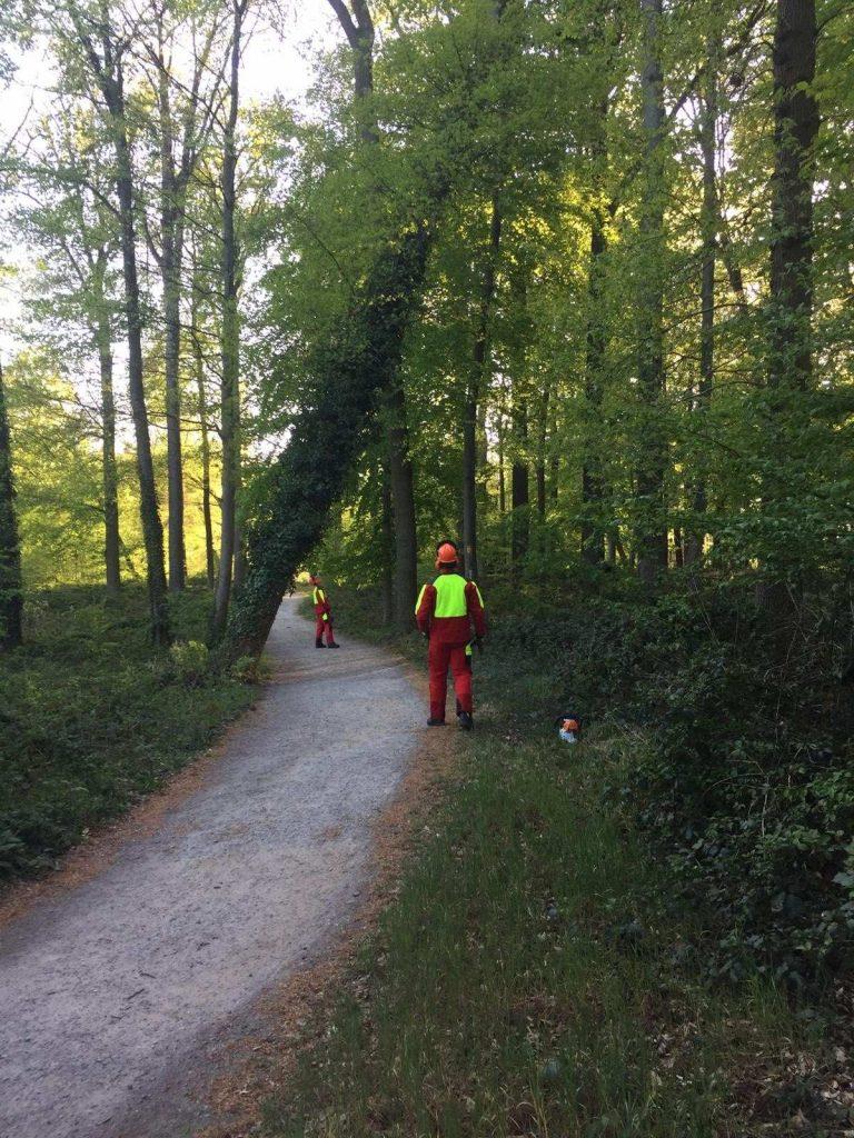Feuerwehr fällte massiven Baum im tiergarten