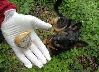 Giftköder in Heiden Carmen Höchst Giftköder-Hund Gahlen