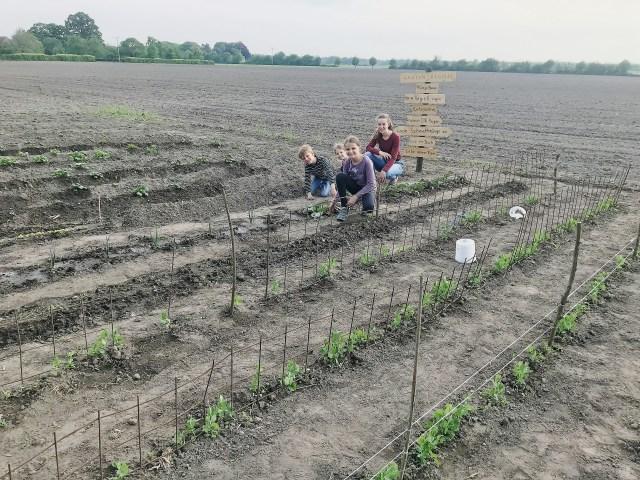 Raesfelder Landkinder legen Feld an