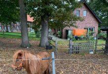 Pony-in-Kirchhellen-von-Wolf-gerissen