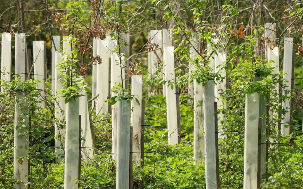 Neue-Baumbepflanzung-