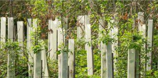 Neue Baumbepflanzung in Raesfeld Förderprogramm Umwelt