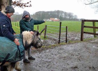 Wolf-Gloria-auf-Pferdehof-in-Hünxe