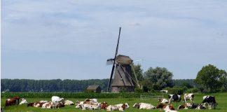 Corona Appell Ausflug Niederlande
