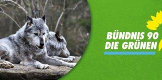 Wolf-in-Borken-Grüne-Borken