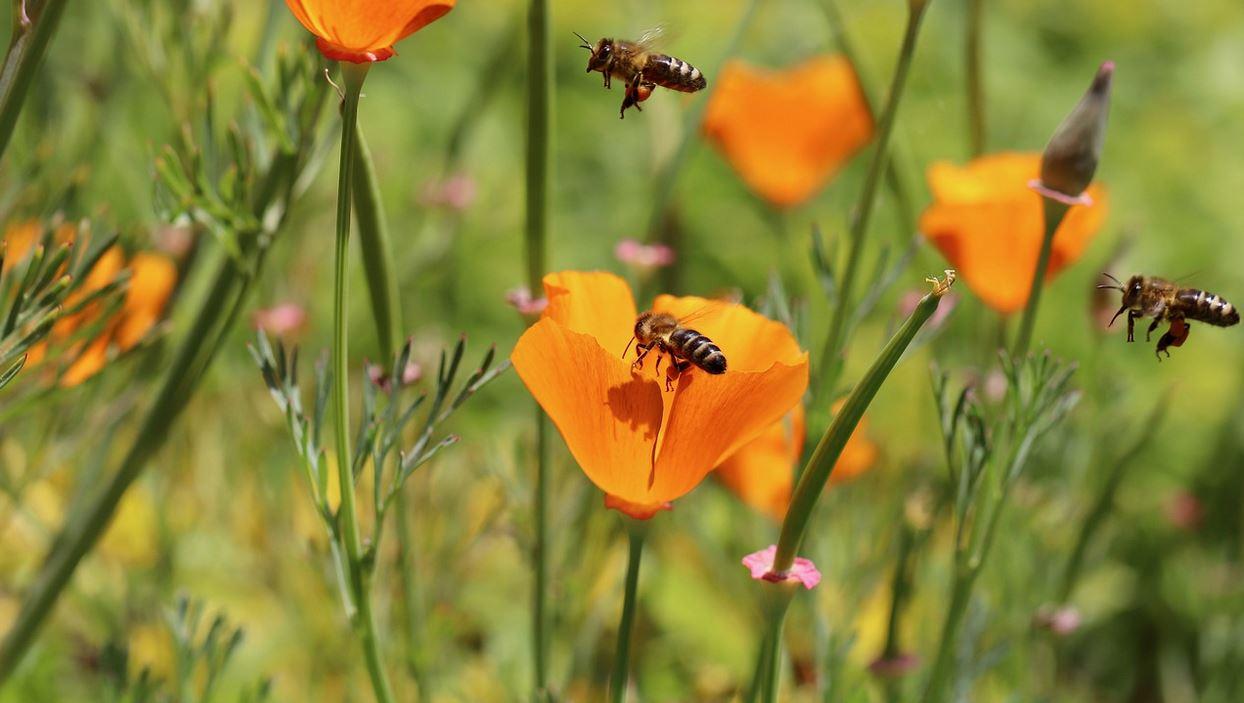 Landwirtschaft Bienen